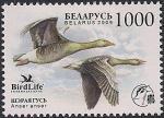 Беларусь 2009 год. Серый гусь. 1 марка (042.458)