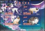 Кошки, Конго 2013 год, малый лист.