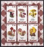 Малави 2011 год. Грибы. Малый лист