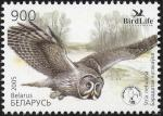 Беларусь 2005 год. Птица года. Бородатый неясыть. 1 марка (BY0315)