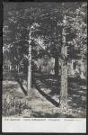 Почтовая карточка прошла почту 24.12.1913 г. Худ. Шишкин. Сосны освещенные солнцем