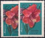 СССР 1971 год. Амариллис (4015). Разновидность - темный цвет у марки слева