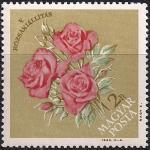Венгрия 1963 год. Пятая венгерская выставка роз в Будапеште. 1 марка