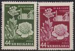 Болгария 1956 год. Ярмарка в Пловдиве. Роза. 2 марки с наклейкой