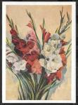 Почтовая карточка № 128. Гладиолусы. Подписана, 1959 год