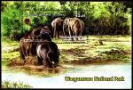 Шри-Ланка 2019 год. Национальный парк. Слоны. Блок