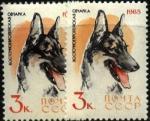 СССР 1965 год. Восточно-европейская овчарка (3075). Разновидность - тёмная бумага и цвет правой марки (Ю)