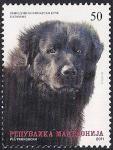 Македония 2011 год. Собаки. Шотландская овчарка. 1 марка (н)
