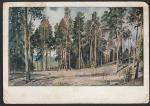 "ПК. Картина И.И. Шишкина ""Полянка с соснами"", 30-е годы"