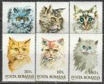 Румыния 1993 год. Кошки, 6 марок. (Н