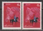 """СССР 1968 год. Конный спорт. Арабская лошадь. Разновидность - """"разрыв повода"""" (№ 3508)"""