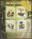 Конго 2009 год. Грибы, малый лист