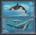 Россия 2012 год, Киты, пара марок