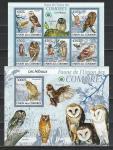 Птицы, Совы, Коморы 2009 г, малый лист+блок. (нар)