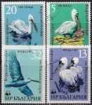 Болгария 1984 год. Пеликаны. 4 гашёные марки