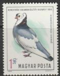 Венгрия 1969 год. Международная выставка голубей в Будапеште. 1 марка