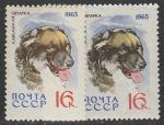 СССР 1965 год. Кавказская овчарка. Разновидность - разный оттенок, 2 марки (3082)