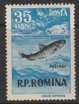 Румыния 1956 год. Рыба, 1 марка из серии (297.1567)