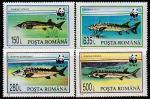 Румыния 1994 год. Осетровые рыбы, 4 марки (297.5034)